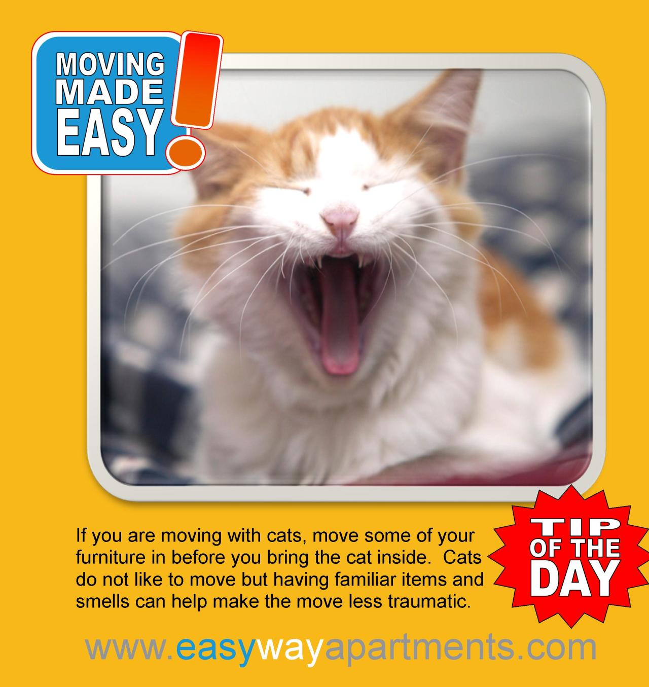 #moving made #easy | moving with a #cat
