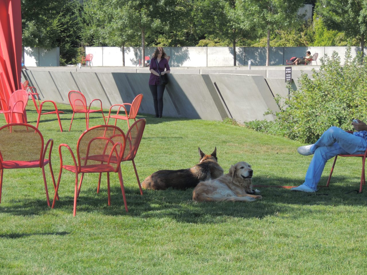 #Seattle #DogDays #Olympic #Sculpture Park